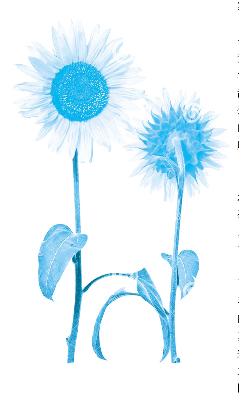 背景 壁纸 设计 矢量 矢量图 素材 植物 种子 800_1323 竖版 竖屏